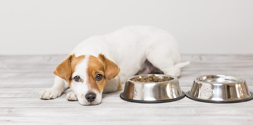 Cuanto debe comer un perro