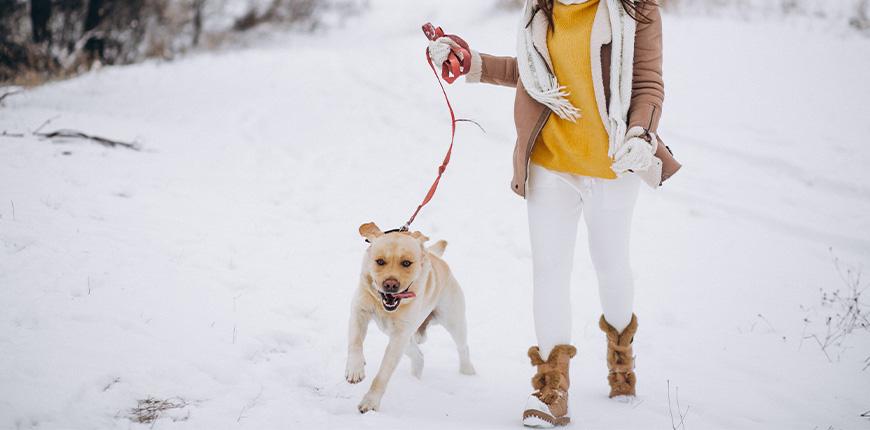 Pasea a tu perro en invierno