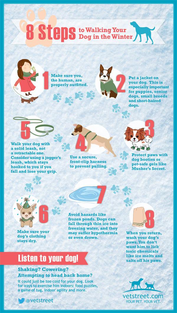 Consejos para pasear al perro en invierno Infografía