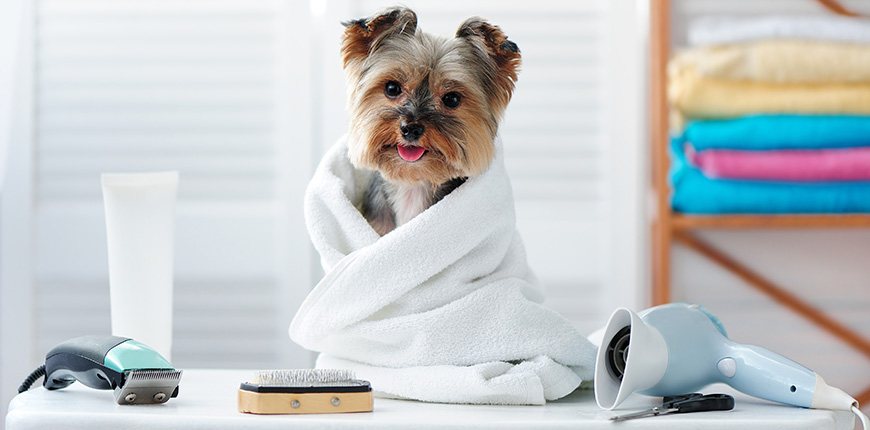 Productos básicos para el cuidado de tu perro