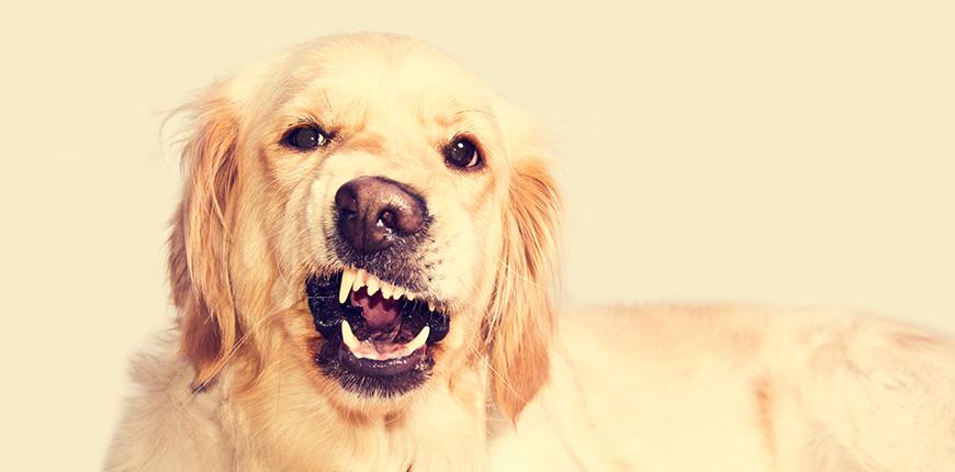Que comunican los perros